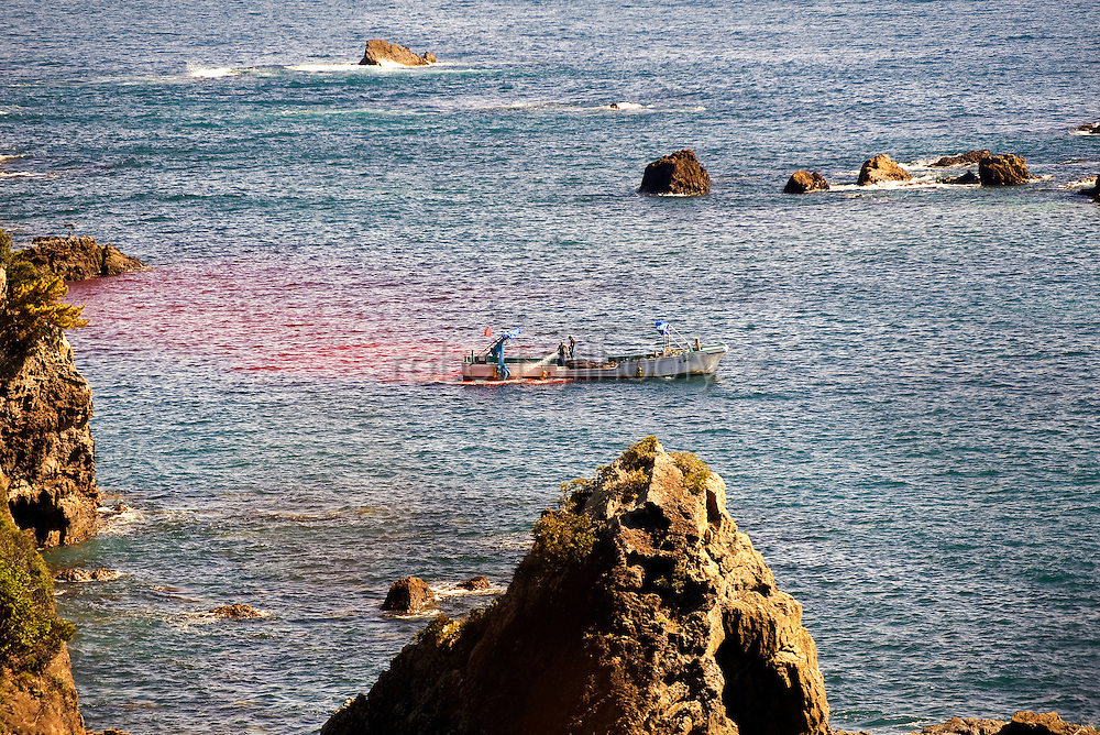 A fisherman washes away blood from the deck of his boat, on which lie the carcasses of what appear to be pilot whales, which are members of the dolphin family at a cove in Taiji, Japan on 10 September  2009. .Photographer: Robert Gilhooly