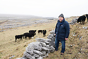 23/03/2016 Bertie Joyce from Inis Mor with his cattle on the largest of the 3 Arann Islands. Photo:Andrew Downes, xposure.