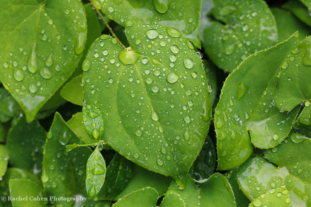 &quot;Life'<br />