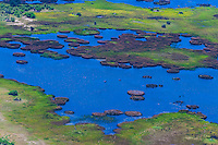 Aerial view of hippos in water, Okavango Delta, Botswana.