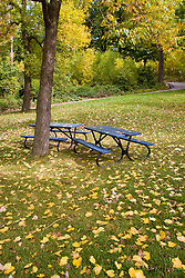 Montreal, QC, Canada. Autumn tree at Saint Helen's Island, an island in the Saint Lawrence River, in the territory of the city of Montreal. / Arvore no outono, na Ilha de Santa Helena, uma ilha no Rio Sain Lawrence, na cidade de Montreal