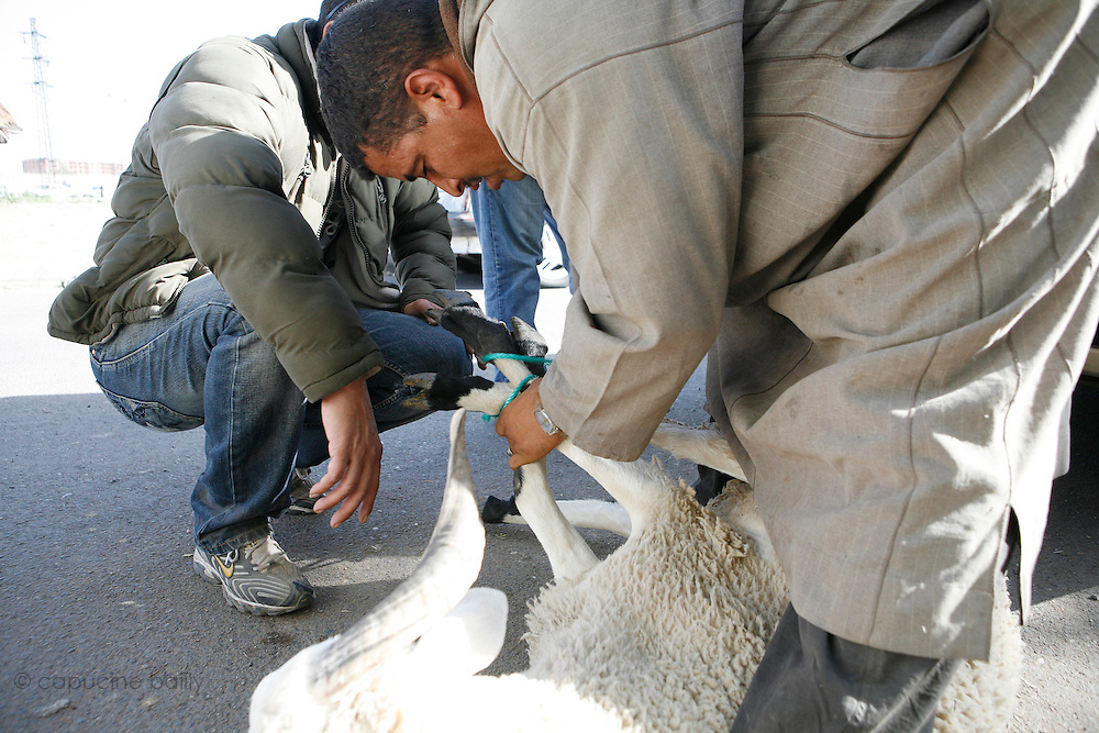 Marrakech, Maroc. 20 Decembre 2007..Aid El Kebir est une des fetes les plus importantes de l'Islam...Marrakesh, Morocco. December 20th 2007..After buying a sheep at the souk Mustapha (left) and his friend Khalid attached it to put it in the trunk to bring it home the day before Aïd-al-Kebir. Eid Al-Adha is one of the most important celebrations in the Islam traditions..