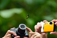 Tourists take a photograph, with point and shoot cameras, of a caterpillar hanging from a thread of silk in Manuel Antonio National Park, Costa Rica.