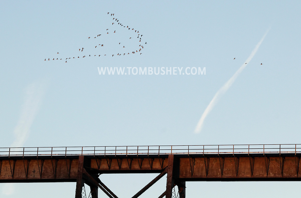 Salisbury Mills, New York - A flock of Canada geese catches the light of the setting sun while flying in formation above the Moodna Viaduct railroad trestle on Oct. 13, 2010.