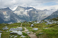 Abbott Ridge Trail. Mount Sir Donald and the Illecillewaet Glacier are in the distance. Selkirk Mountains Glacier National Park British Columbia
