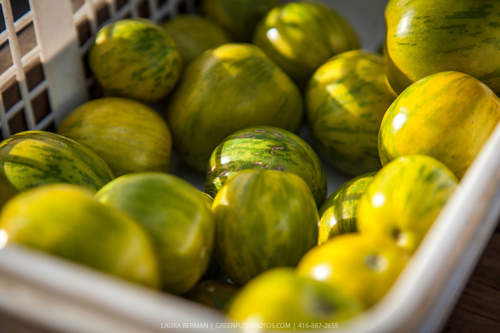 Green Zebra heirloom tomatoes at a farmers market.