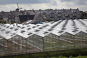 Greenhouses Monster Holland