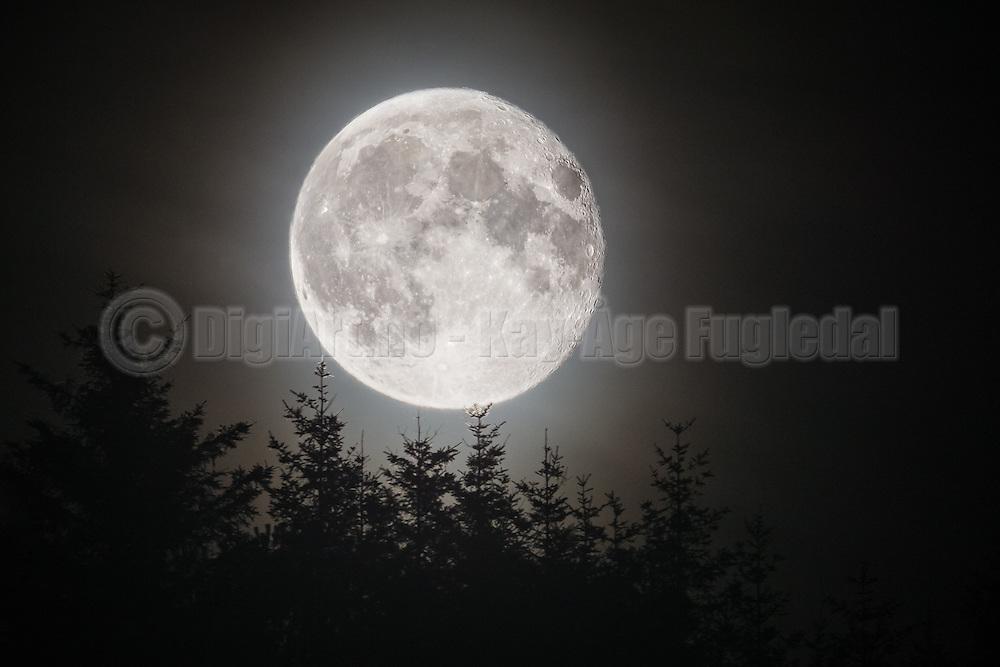 Full moon over tree tops | Fullmåne over tred topper