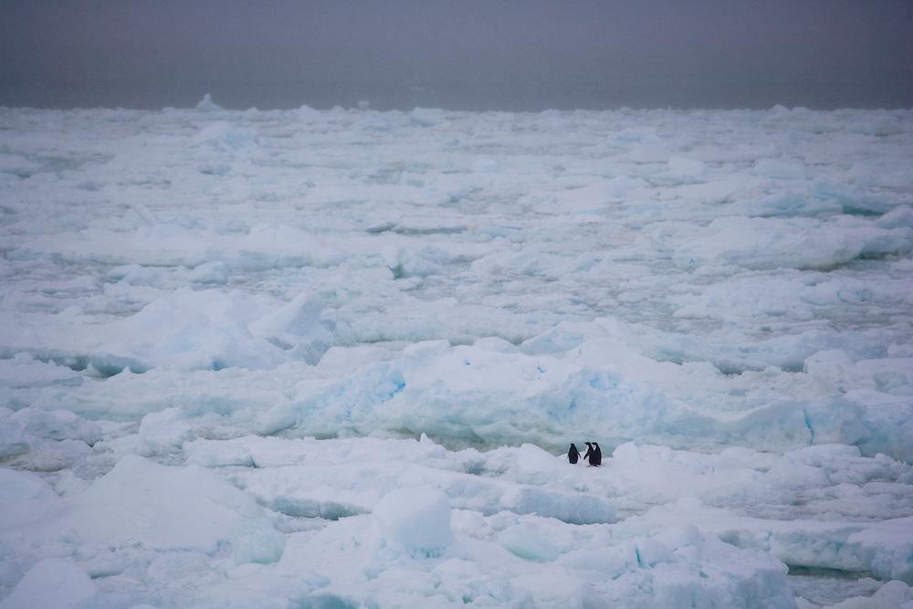February 7th 2007. Southern Ocean..Greenpeace ship MY Esperanza reaches the ice edge near Antarctica .