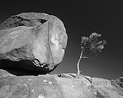 The tenous foothold of a boulder and a small tree point to the harsh environment on top of the highest peak in this monochrome study of the Smoky Mountains.