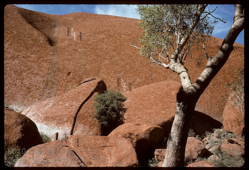 Jumble of red boulders and tree create design at base of Ayers Rock on summer day; Uluru NP. Australia