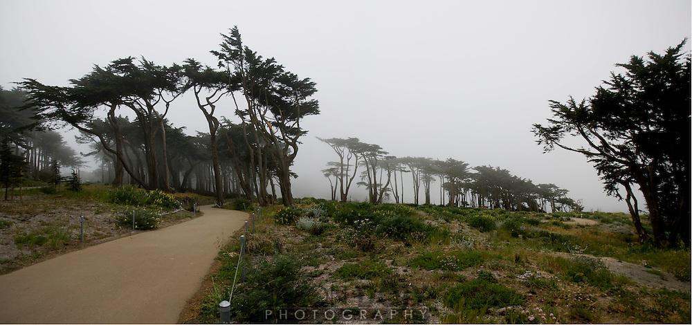 Fog seacliff..photo by Jason Doiy.4/28/08