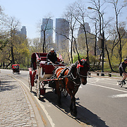 A horse and carriage taking tourist sightseeing during a warm spring day in Central Park, Manhattan, New York, USA. Photo Tim Clayton
