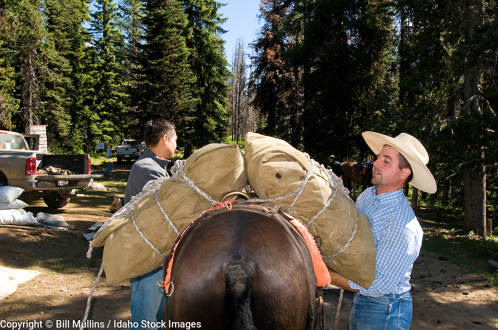 Backcountry guide loading mule for trip into Meadow Creek in the Nez Perce National Forest ID