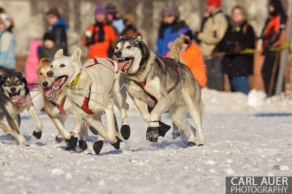 March 7th, 2009:  Anchorage, Alaska - Seconds before losing the trailing sled to a light pole, the team of Trent Herbst from Ketchum, Idaho speed onto Cordova Street from 4th Avenue during the Ceremonial Start of the 2009 Iditarod.