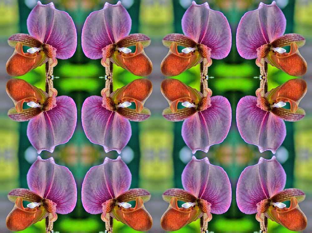 These Mandala designs began as a original image of a beautiful orchid taken at the Chiangmai Flower Festival in Chiang Mai, Thailand