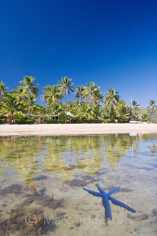 A blue starfish, linckia laevigata, in beautiful clear water off a tropical island in Fiji.