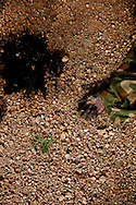 A dead SAF soilder lies on the edge of the road in EL Hamar on the outskirts of Kadulguli where fierce fighting between the SPLA and SAF forces continues. The SPLA says they took over EL Hamra in a short 20 minutes battle and were able to sieze over 40 trucks and truckloads of ammunition. So far the SPLA has been winning the key battles in the war.