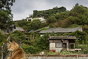 Aoshima, Ehime prefecture, September 4 2015 - The abandonned elementary school covered by vegetation, with a cat in the background.<br /> Aoshima (Ao island) is one of the several « cat islands » in Japan. Due to the decreasing of its poluation, the island now host about 6 times more cats than residents.