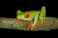 Tree Frogs!