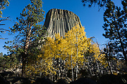 Aspen yellow fall colors in Devils Tower National Monument. Bear Lodge Mountains, Black Hills, Wyoming, USA. Devils Tower is a butte of intrusive igneous rock exposed by erosion in the Bear Lodge Mountains, part of the Black Hills, near Hulett and Sundance in Crook County. Devils Tower (aka Bear Lodge Butte) rises dramatically 1267 feet above the Belle Fourche River, standing 867 feet from base to summit, at 5112 feet above sea level. Devils Tower was the first United States National Monument, established on September 24, 1906 by President Theodore Roosevelt.