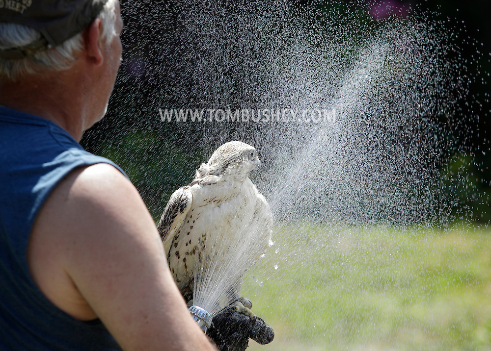 Bloomingburg, New York - A master falconer uses the spray from a hose to cool off his gyrfalcon after giving a presentation at a farm on June 20, 2010. The gyrfalcon is the largest falcon in the world and inhabits arctic regions.
