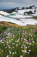 Wildflower meadows, Mount Baker Wilderness Washington