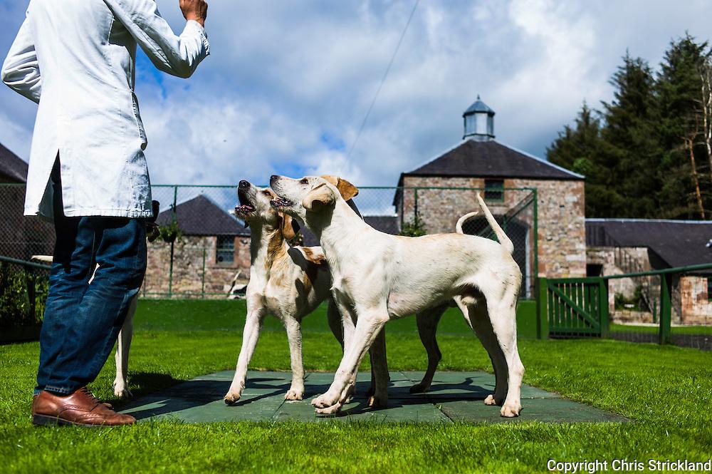 Abbotrule, Bonchester Bridge, Hawick, Scotland, UK. 19th July 2015. Huntsman Johnny Richardson works with hounds on the showing slabs.