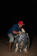 Giant River Turtle (Podocnemis expansa) Jose Belmejo Turning over to keep til daylight.<br /> CAPTIVE-REARING PROGRAM FOR REINTRODUCTION TO THE WILD<br /> CITES II      IUCN ENDANGERED (EN)<br /> Playita Beach, (mid) Orinoco River, 110 Km N of Puerto Ayacucho. Apure Province, VENEZUELA. South America. <br /> L average 90cm, Wgt 30-45kg. Largest fresh water river turtle in S. America.<br /> RANGE: Amazonia, Llanos &amp; Orinoco of Colombia, Venezuela, Brazil, Guianas, Ecuador, Peru &amp; Bolivia.<br /> Project from Base Camp of the Protected area of the Giant River Turtle (&amp; Podocnemis unifilis). (Refugio de Fauna Silvestre, Zona Protectora de Tortuga Arrau, RFSZPTA)