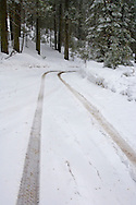 Auto tire tracks on road afer fresh winter snow fall in forest near Crane Flat, Yosemite National Park, California