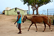 Man leading a horse in Playa Blanca, Holguin, Cuba.