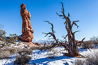 An old dead tree and a sandstone pinnacle, Arches National Park, Utah, USA.