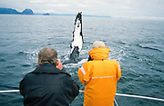 Alaska. Sightseers on a cruise boat marvel at seeing the fluke of a Humpback Whale(Megaptera Novaeangliae) MR