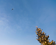 Christmas tree reaching for the sky and a plane