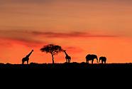 E. Africa Safari