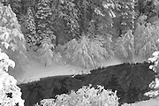 Indian Creek and Forest in Snow From Above, Reflecting Pool, Sierra Nevada Mountains, California Rivers, winter scenes, black and white photography