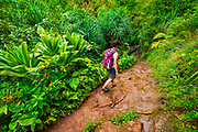 Lush vegetation along the Kalalau Trail, Na Pali Coast, Kauai, Hawaii USA