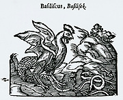 'Basilisk or Cocatrice, Fabulous reptile said to have been hatched by a serpent from a cock's egg. Its look and breath were fatal.Wodcut from From ''Handelende van de Natuere'', Amsterdam, 1644.'