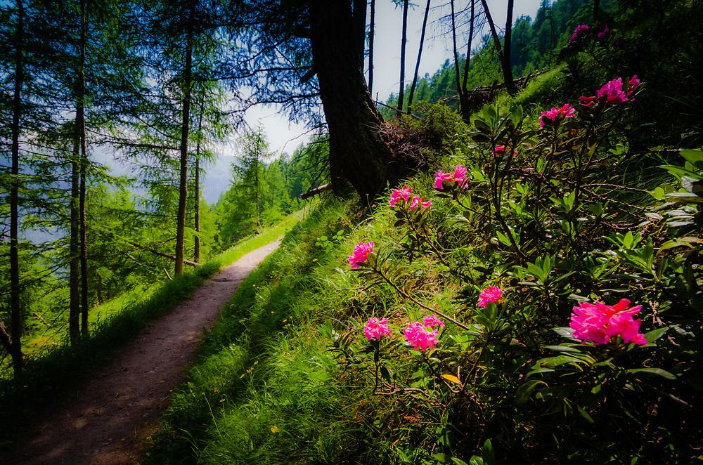 Beside the hiking trail to Trift above Zermatt, Switzerland