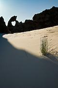 A creeping shadow closes in on a sun-bathing pingao, at Keyhole Rock, Aramoana