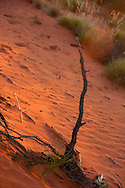 Red soil around Uluru (Ayers Rock)
