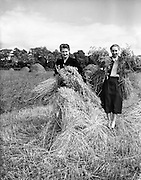 Harvesting at Thurles, Co. Tipperary, The Misses Ryan.02/09/1953