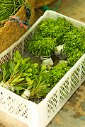 TETOUAN, MOROCCO - 5th April 2016 - Fresh seasonal produce including culinary herbs for cooking at preparing tea for sale at the Tetouan food market, Tetouan medina, Rif region of Northern Morocco.