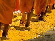 "02 JANUARY 2016 - KHLONG LUANG, PATHUM THANI, THAILAND:  Monks from the Dhammakaya sect walk on a path of marigols laid down by Buddhist lay people at Wat Phra Dhammakaya on the first day of the 5th annual Dhammachai Dhutanaga (a dhutanga is a ""wandering"" and translated as pilgrimage). More than 1,300 monks are participating pilgrimage through central Thailand. The purpose of the pilgrimage is to pay homage to the Buddha, preserve Buddhist culture, welcome the new year, and ""develop virtuous Buddhist youth leaders."" Wat Phra Dhammakaya is the largest Buddhist temple in Thailand and the center of the Dhammakaya movement, a Buddhist sect founded in the 1970s. The monks are using busses on some parts of the pilgrimage this year after complaints about traffic jams caused by the monks walking along main highways.         PHOTO BY JACK KURTZ"