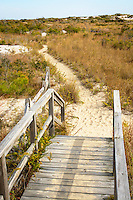 Boardwalk hiking trail passing through the sand dunes, Maryland end of Assateague Island National Seashore USA.