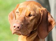 Gun Dog Training With Natalie Cannon 14-4-12
