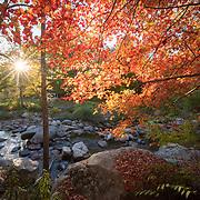 MWV Autumn