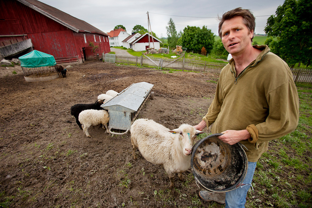 The Glad Ostensen family in Gjerdrum, Norway.  Anders Ostensen, 48, tends some of sheep on his farm. Model-Released.