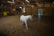 Volunteer Candy Pickelsimer prepares a horse for a therapy session.