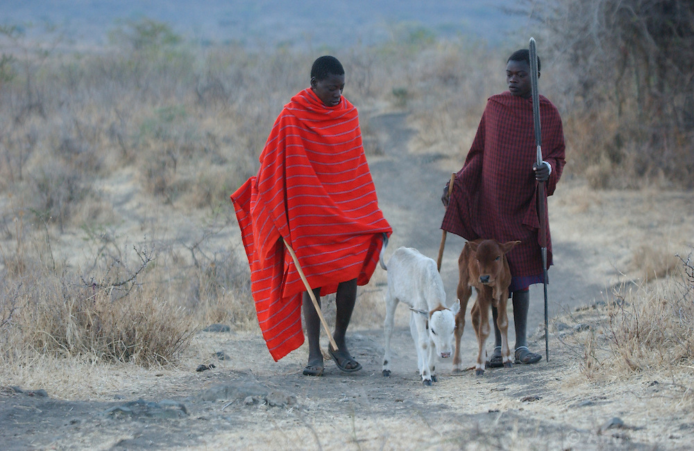 Pastoral community of Masai who are under threat of losing their lands because of the tourism industry in Ngorogoro in Tanzania September 30, 2003 (Ami Vitale)